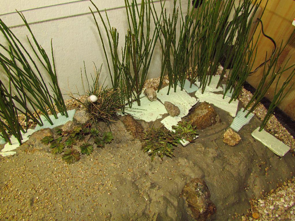 formikarium , ytong , akvarium, vyroba teraria