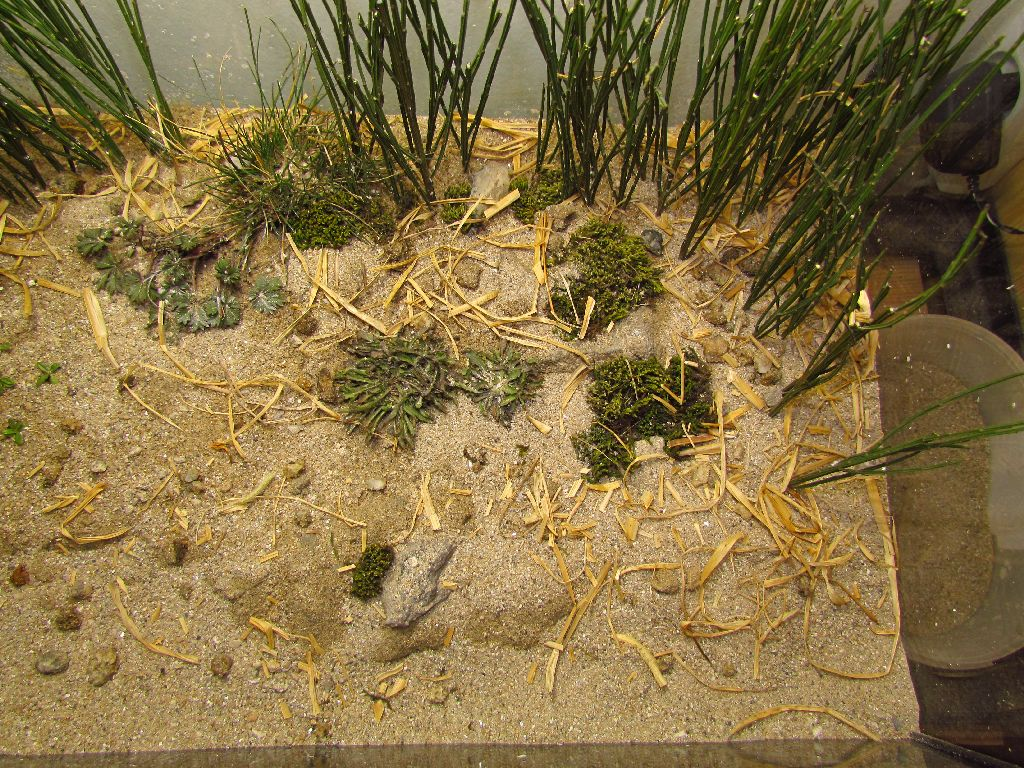 formikarium , mravčia farma , akvarium, vyroba teraria