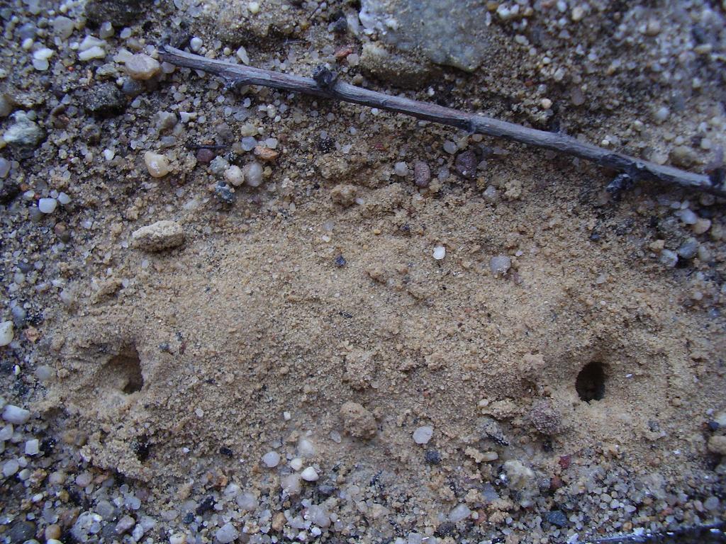 mravcia farma