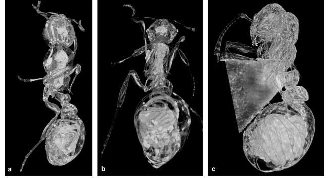 myrmica , mermithidae