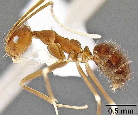 mravce mravec zatania