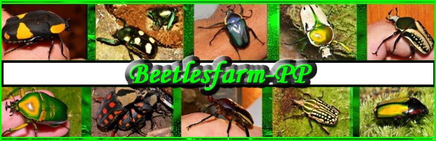 beetlesfarm