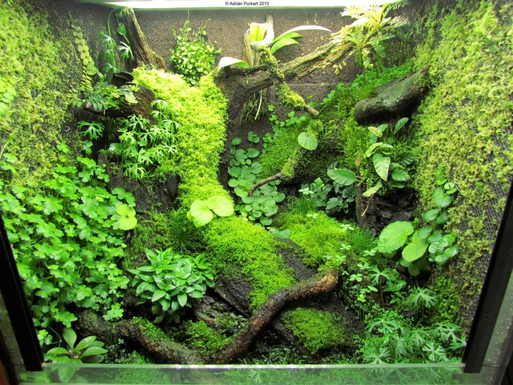 epiweb hygrolon terrarium