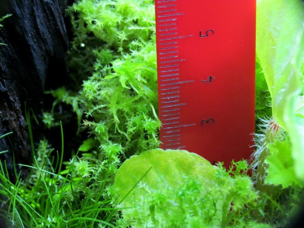 sphagnum terrarium moss