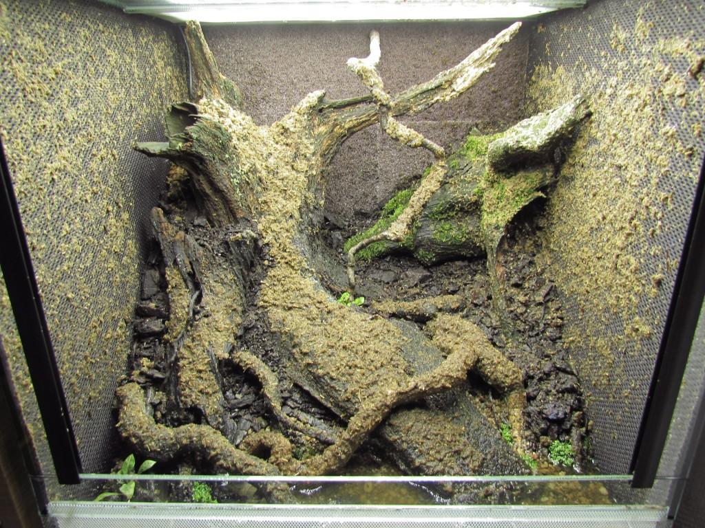 Dusk moss mix