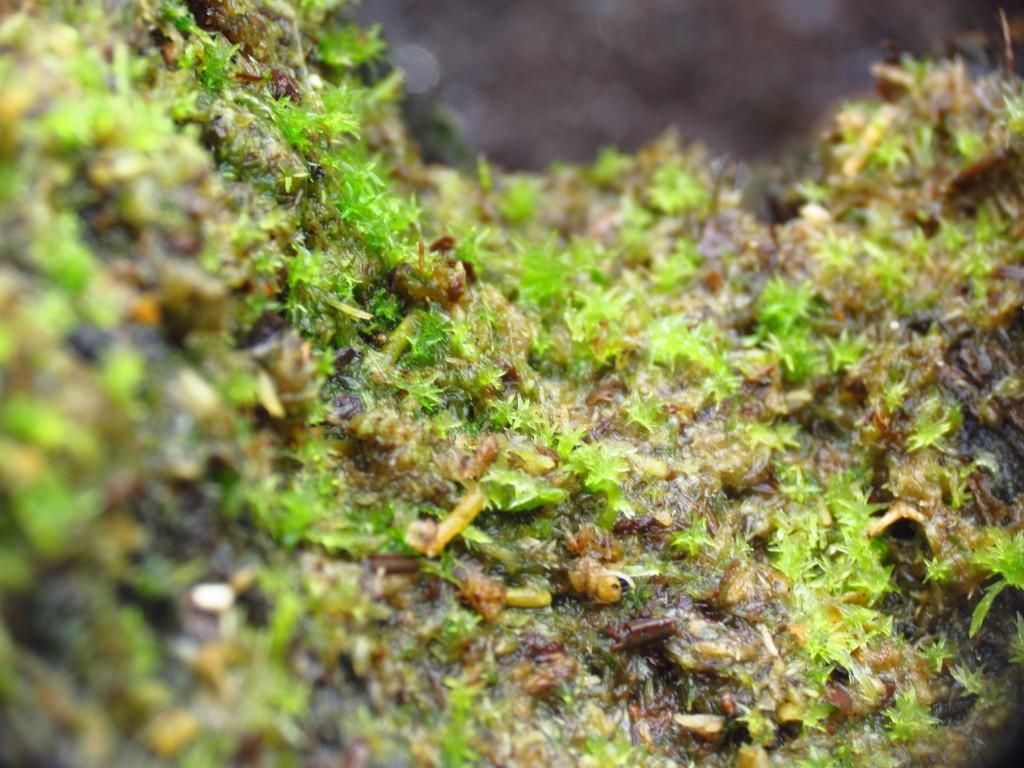 dusk moss mix terrarium