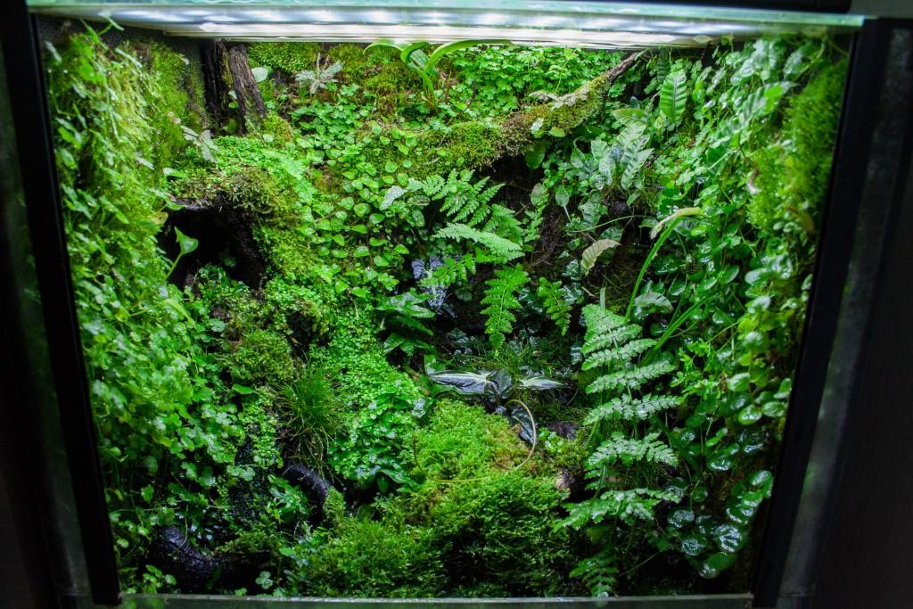 paludarium tropical terrarium ferns moss hygrolon epiweb